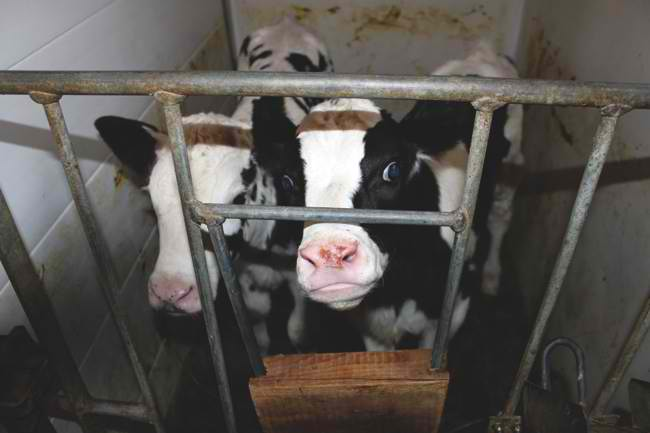 Why Milk?